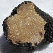 Black Summer Truffle or Scorzone Truffle (Tuber Aestivum Vitt.) 100g.*