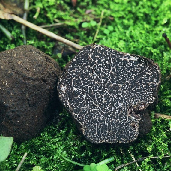Precious Black Truffle (Tuber Melanosporum Vitt.) 100g.*