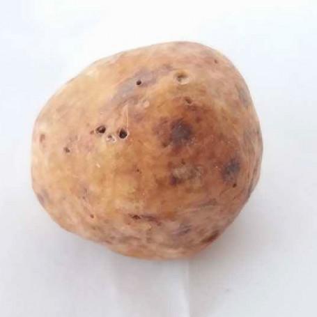 Bianchetto Truffle or Marzuolo Truffle (Tuber Borchii Vitt. o Albidum Pico) 100g.*